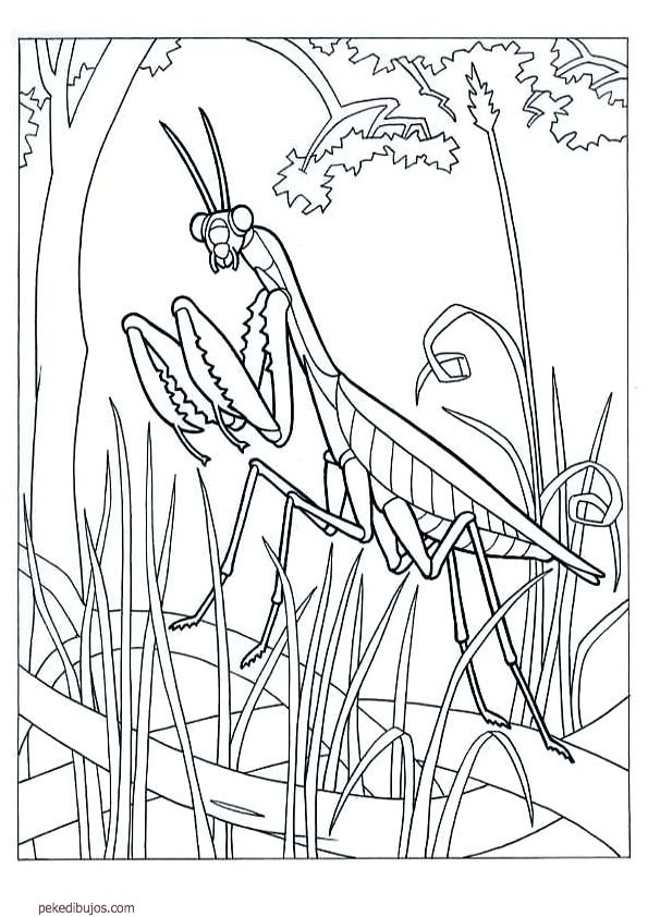 Rock Coloring Page Coloring Pages Rock Coloring Pages